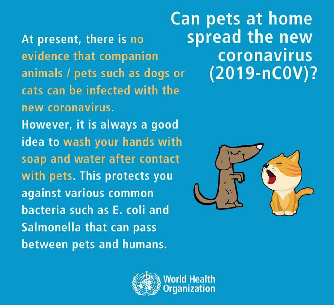 Aktuelle Informationen der WHO über Hunde und den Coronavirus